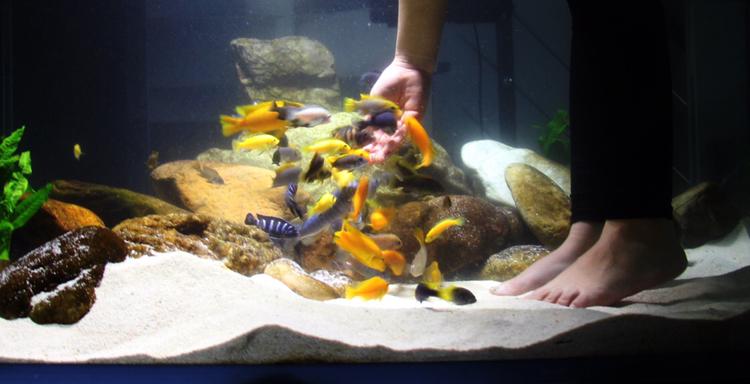 养鱼痛并快乐着 北京观赏鱼 北京龙鱼第2张