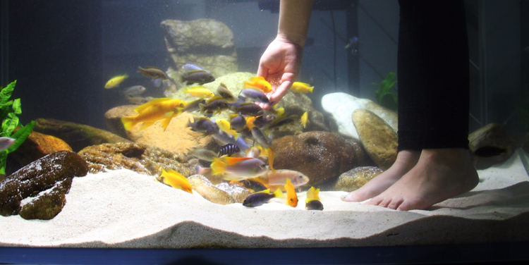 养鱼痛并快乐着 北京观赏鱼 北京龙鱼第3张