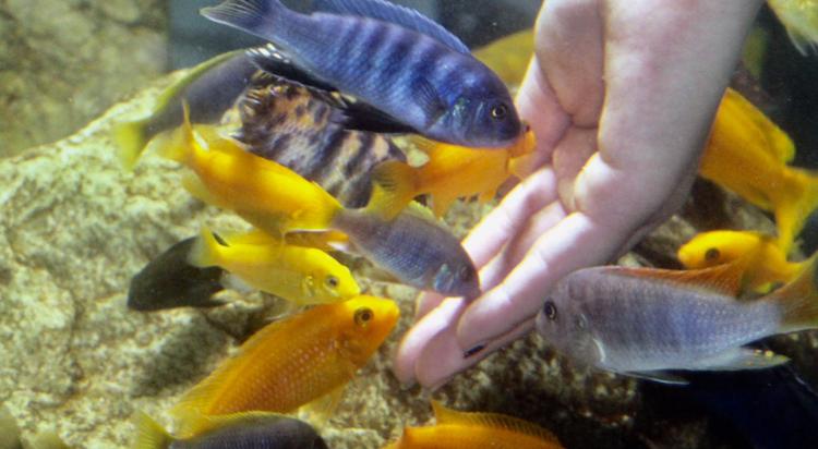 养鱼痛并快乐着 北京观赏鱼 北京龙鱼第4张