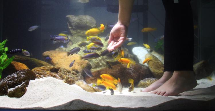 养鱼痛并快乐着 北京观赏鱼 北京龙鱼第5张