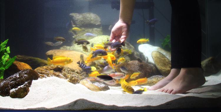 养鱼痛并快乐着 北京观赏鱼 北京龙鱼第7张