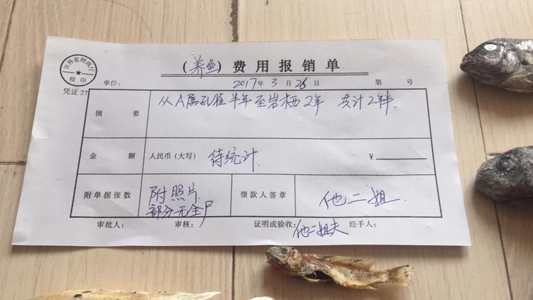 养鱼痛并快乐着 北京观赏鱼 北京龙鱼第10张