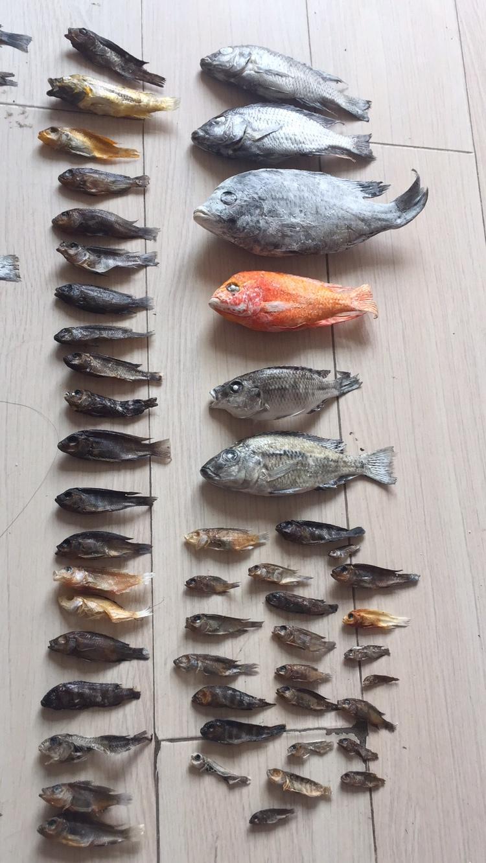 养鱼痛并快乐着 北京观赏鱼 北京龙鱼第8张