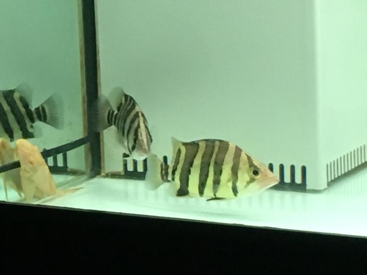 北京哪个水族店有豹纹夫晒晒新缸 北京龙鱼论坛 北京龙鱼第2张