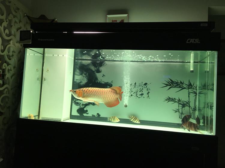 北京哪个水族店有豹纹夫晒晒新缸 北京龙鱼论坛 北京龙鱼第1张