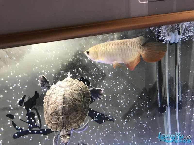 如果没有后面的气泡这算空气缸吗 北京观赏鱼 北京龙鱼第4张
