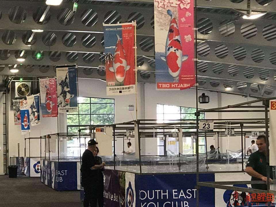 前不久在苏格兰的一场锦鲤展 北京龙鱼论坛 北京龙鱼第1张