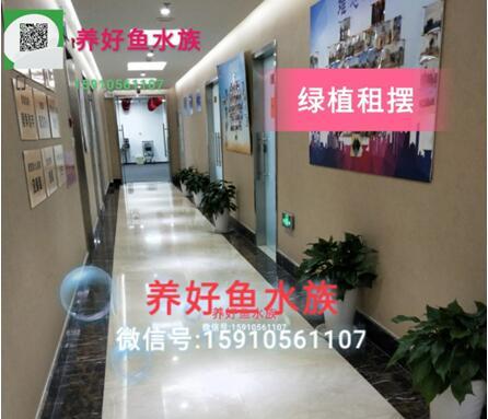 北京市花鸟鱼虫市场出NECTFC灯管及水中灯 北京龙鱼论坛