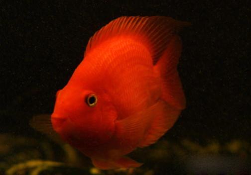 每日有趣的鱼 北京观赏鱼 北京龙鱼第2张