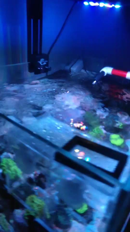 北京财神鹦鹉-红财神哪个Bot M40波浪泵突然变小 北京观赏鱼 北京龙鱼第1张