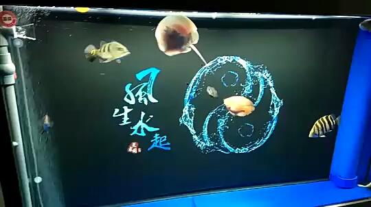 我刚开始养鱼时 北京龙鱼论坛 北京龙鱼第1张