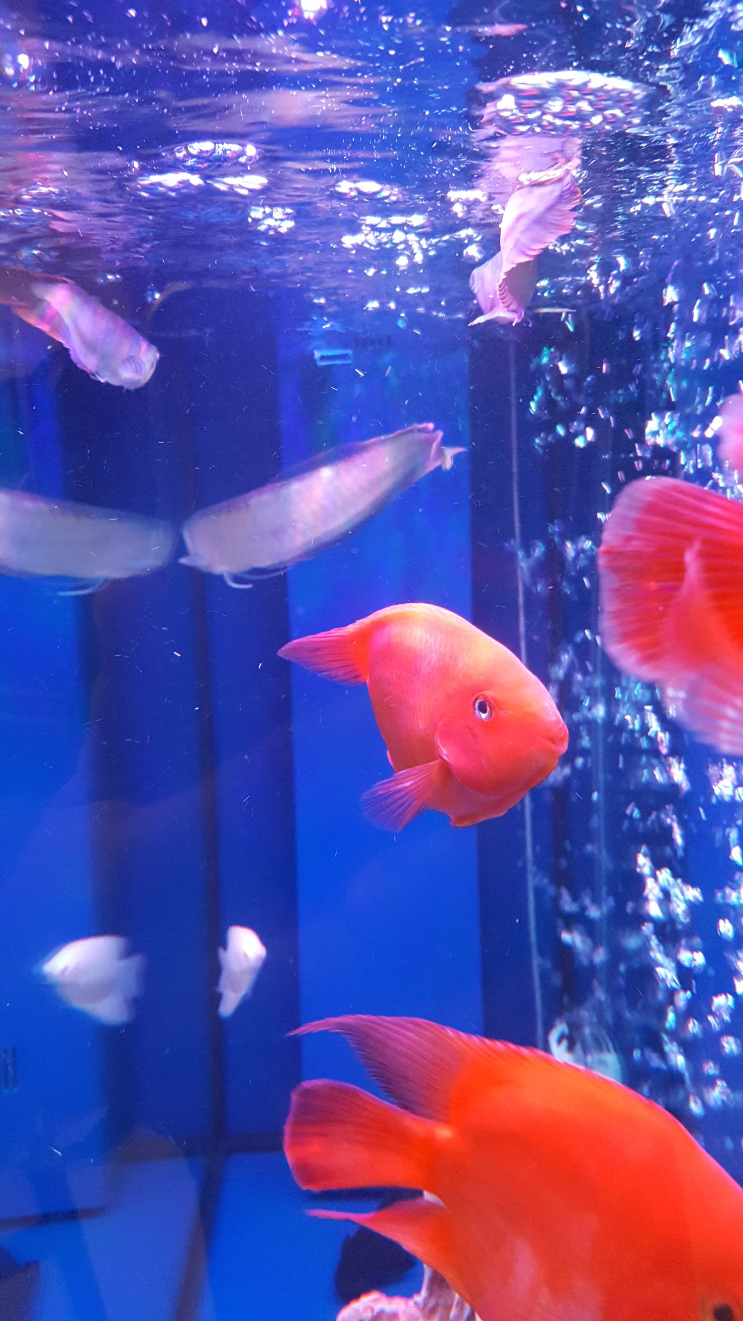 这是什么情况?要怎么解决 北京观赏鱼 北京龙鱼第2张