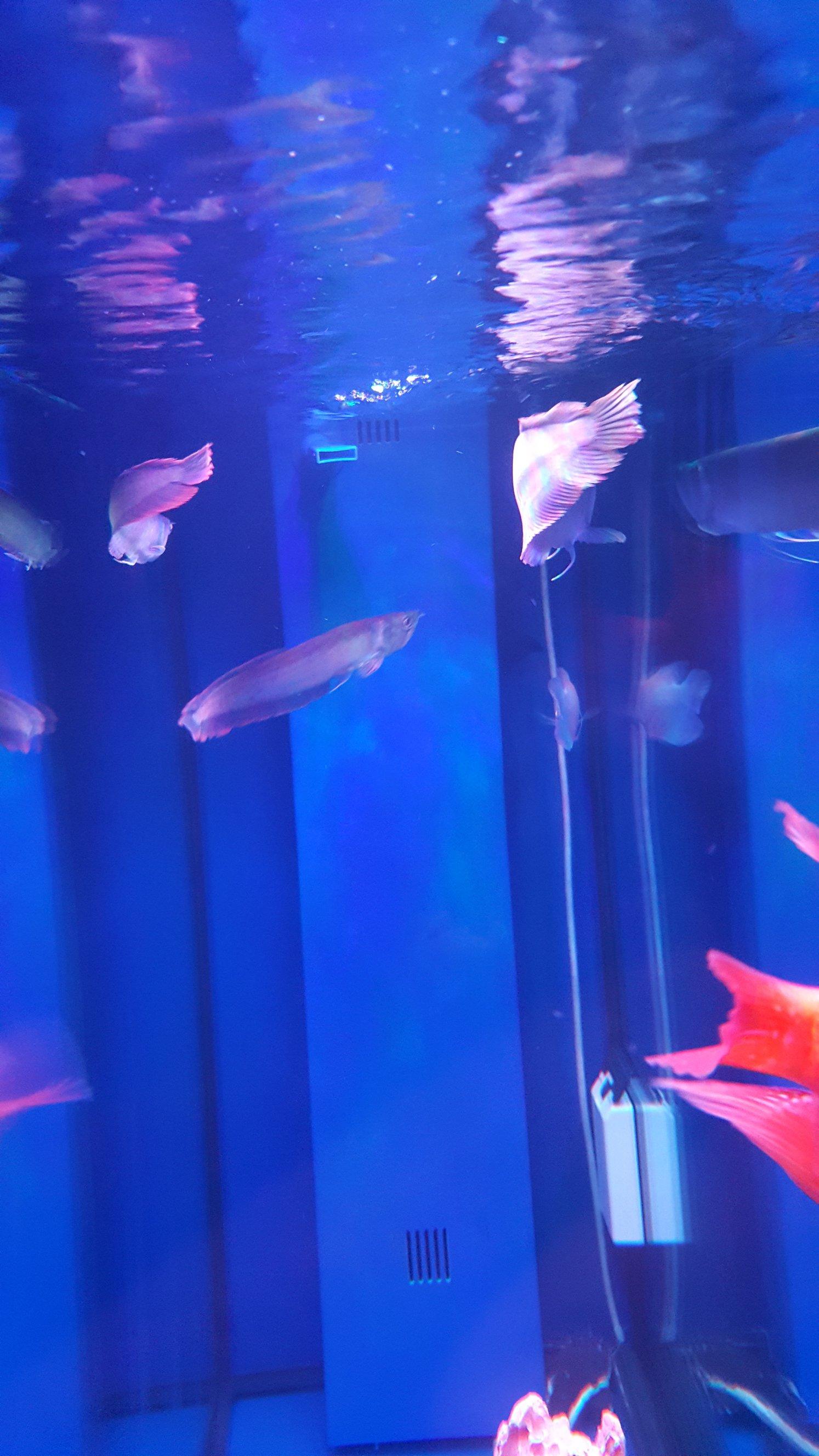这是什么情况?要怎么解决 北京观赏鱼 北京龙鱼第1张