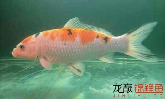 大家帮我讲价 北京龙鱼论坛 北京龙鱼第3张