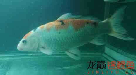 大家帮我讲价 北京龙鱼论坛 北京龙鱼第4张