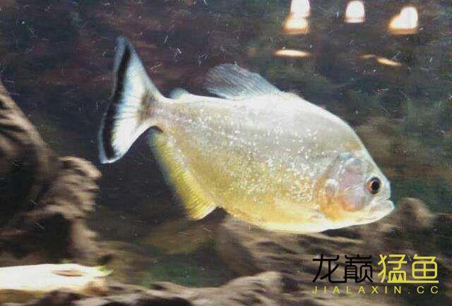 北京古玩城在畅游 北京龙鱼论坛 北京龙鱼第2张