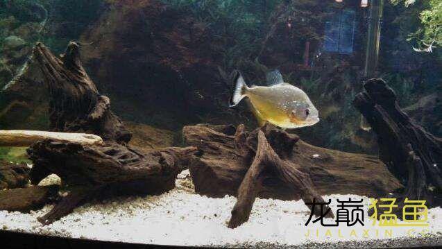 北京古玩城在畅游 北京龙鱼论坛 北京龙鱼第4张