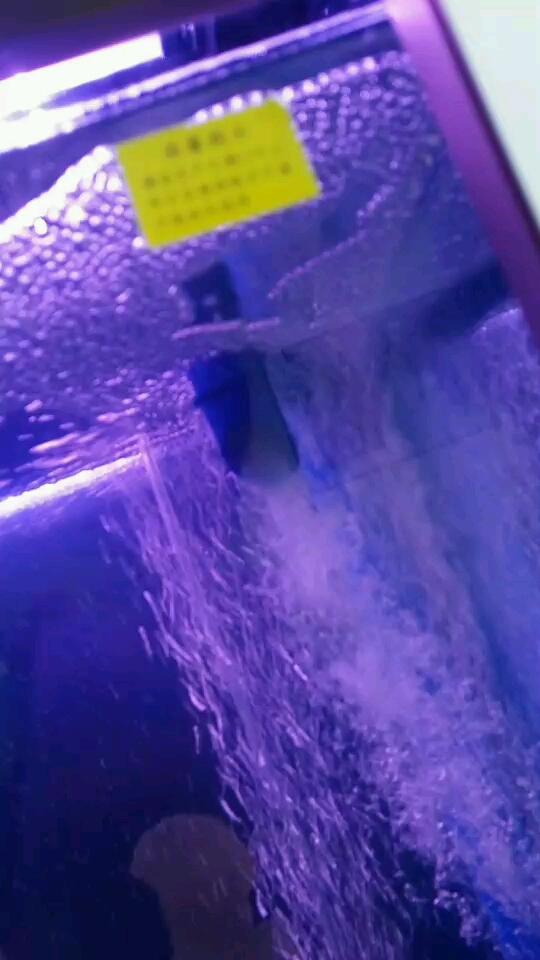 北京哪个水族店卖粗线银板求指教养龙鱼 北京观赏鱼 北京龙鱼第1张