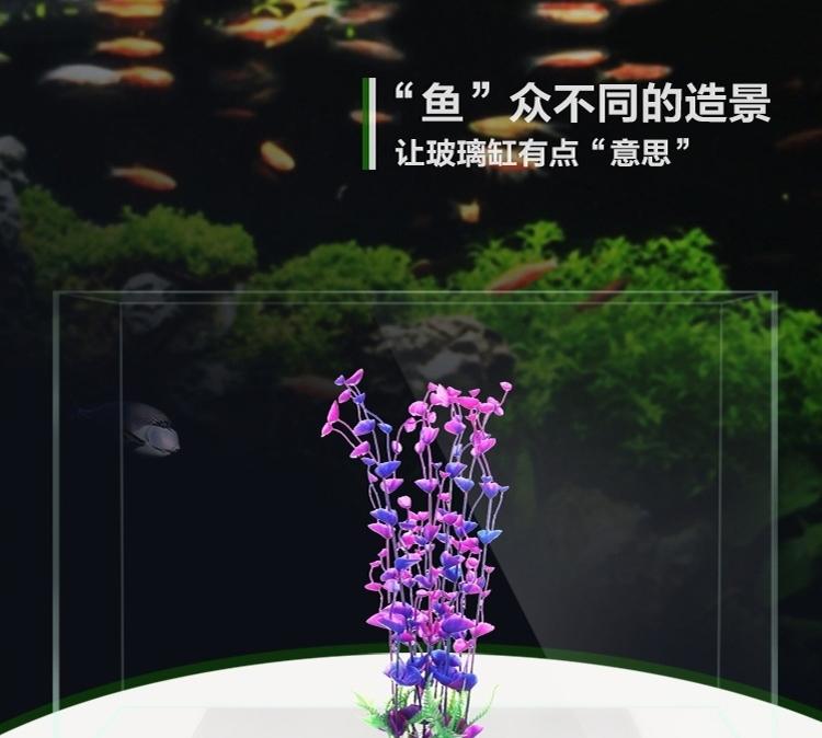 养鱼需要坚持 北京观赏鱼