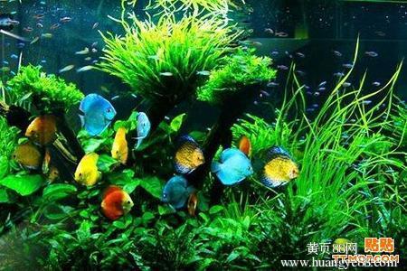 吃饱了你们都是爷 北京观赏鱼 北京龙鱼第2张