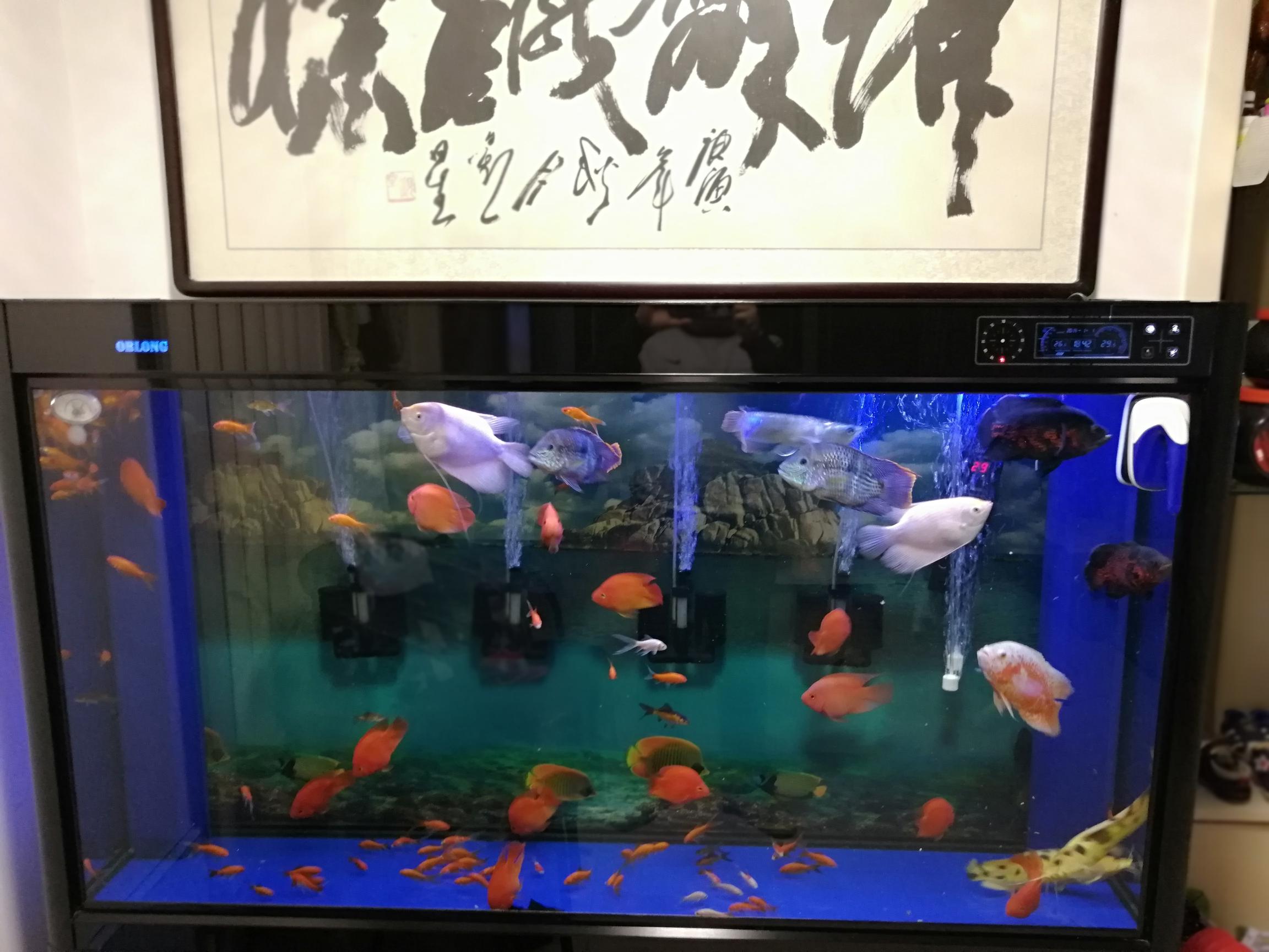 北京购买鱼缸鱼缸近期怪事大家帮忙 北京龙鱼论坛 北京龙鱼第1张