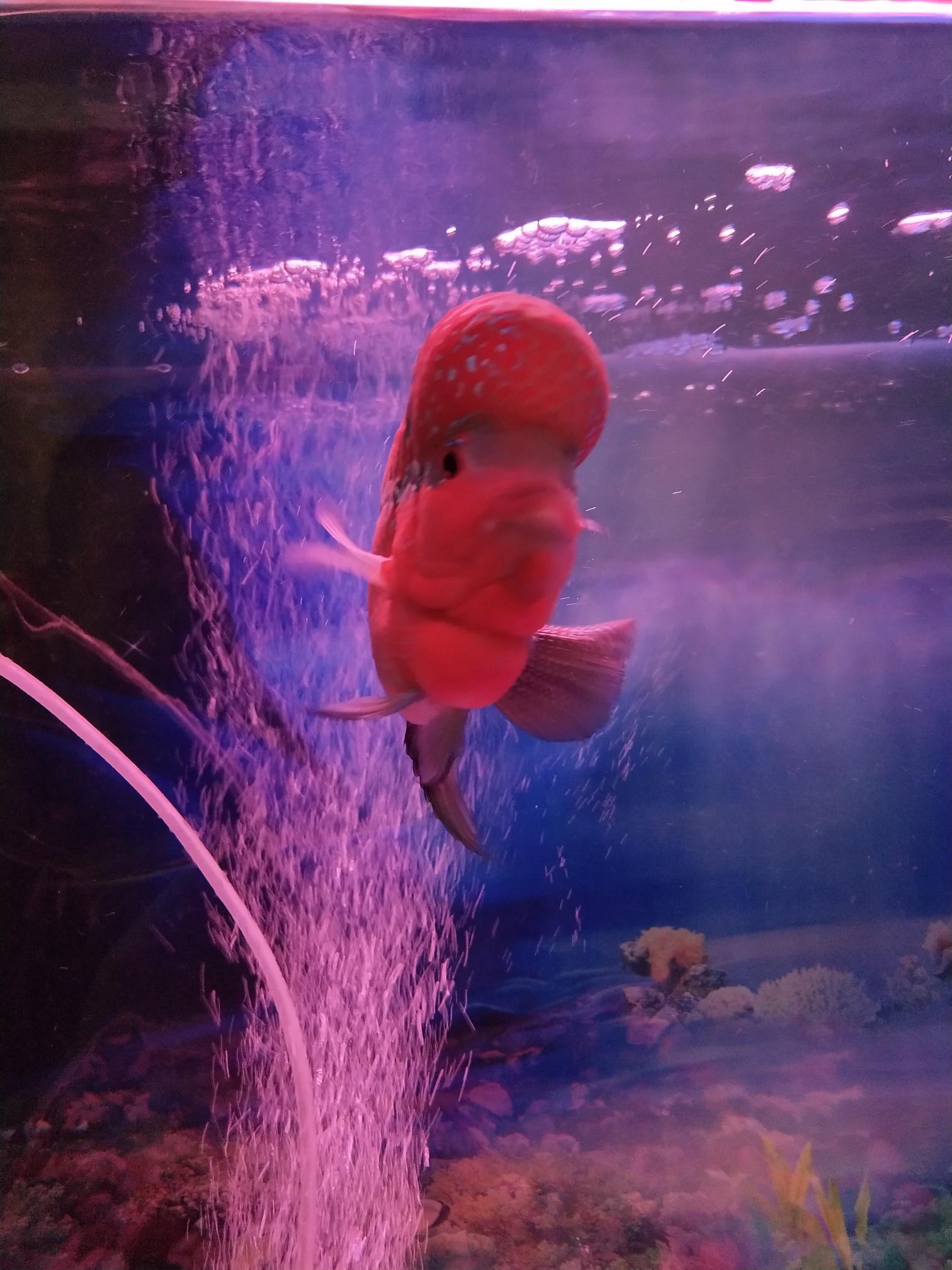 北京花鸟鱼市场照片和清晰度不一样?手机X20 北京龙鱼论坛 北京龙鱼第2张