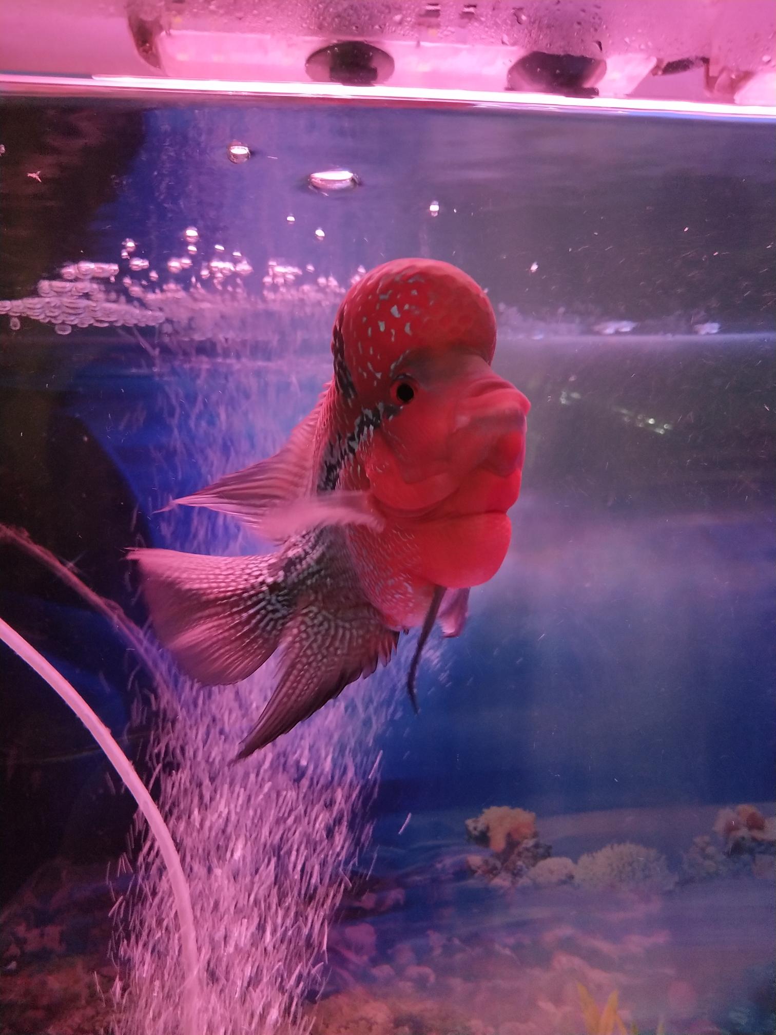 北京花鸟鱼市场照片和清晰度不一样?手机X20 北京龙鱼论坛 北京龙鱼第5张
