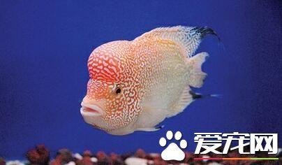 浅谈龙鱼灯光发色与掉眼协调调整 北京观赏鱼 北京龙鱼第4张