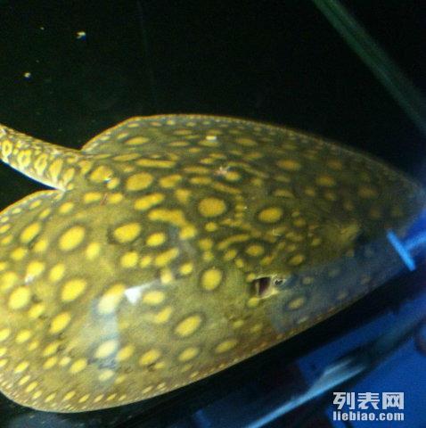 新手入坑过背 北京观赏鱼