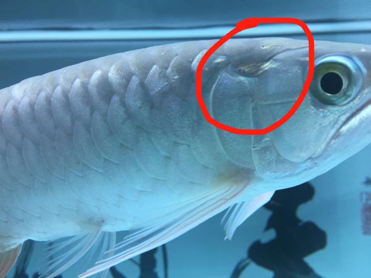 北京二手鱼缸水族箱这改怎么治疗?