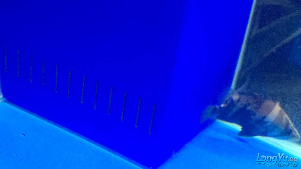 四角溢流吸力小鱼屎吸不干净的问题 北京观赏鱼 北京龙鱼第2张