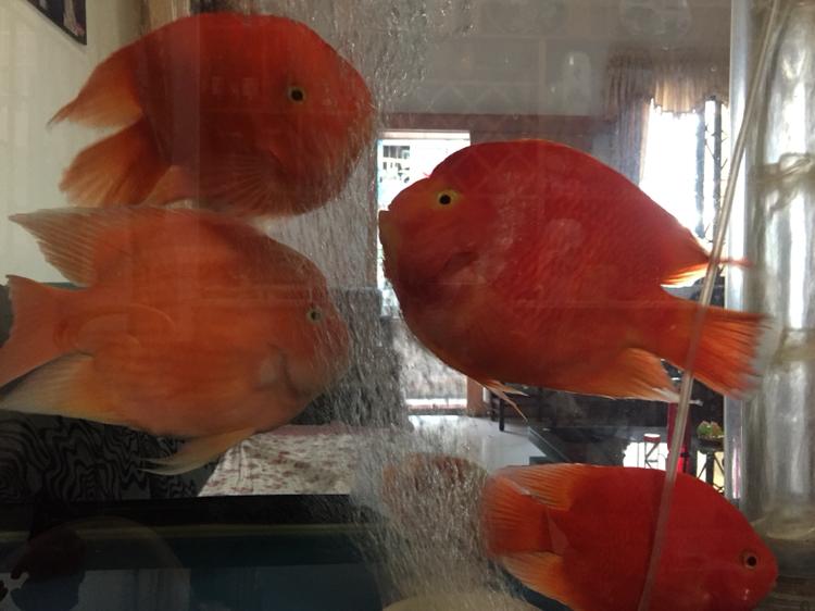 北京帝王三间鼠鱼哪个店的最好喜欢你们 北京观赏鱼 北京龙鱼第2张