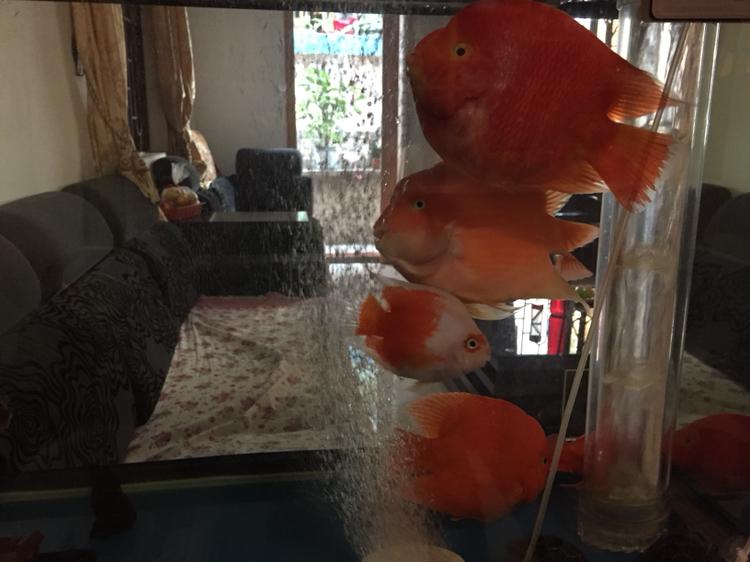 北京帝王三间鼠鱼哪个店的最好喜欢你们 北京观赏鱼 北京龙鱼第3张
