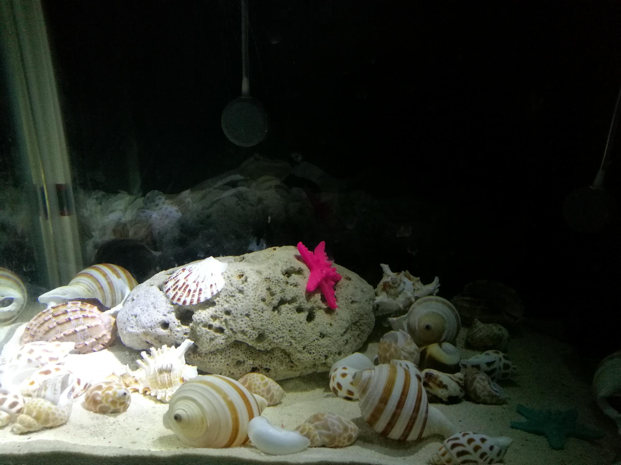 准备开一缸卷贝类等鱼中 北京观赏鱼 北京龙鱼第2张