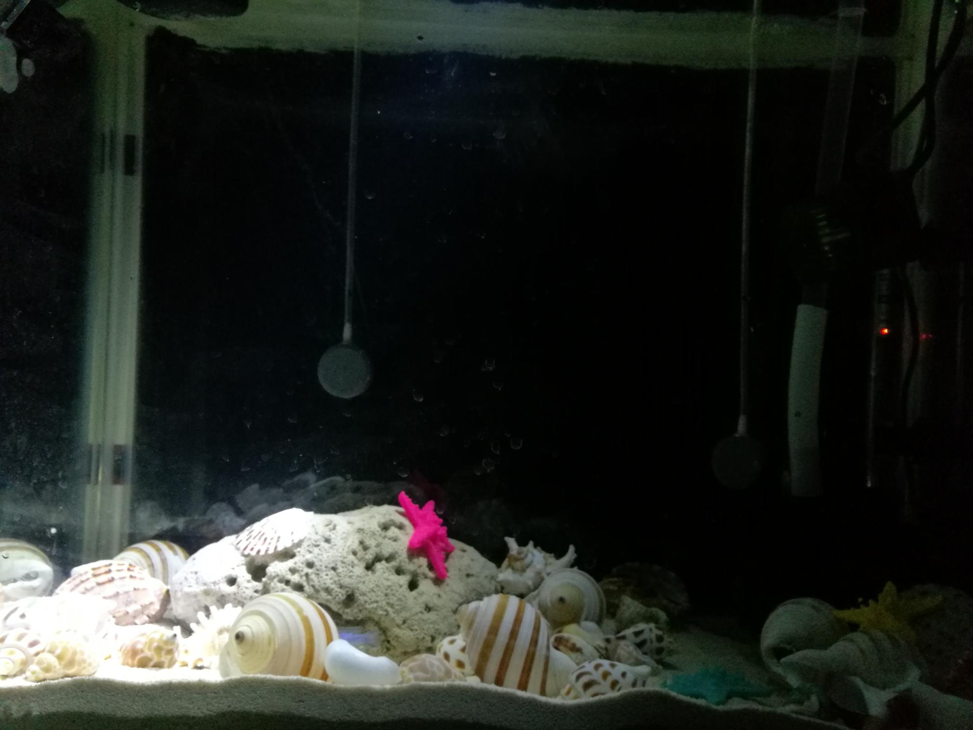 准备开一缸卷贝类等鱼中 北京观赏鱼 北京龙鱼第4张