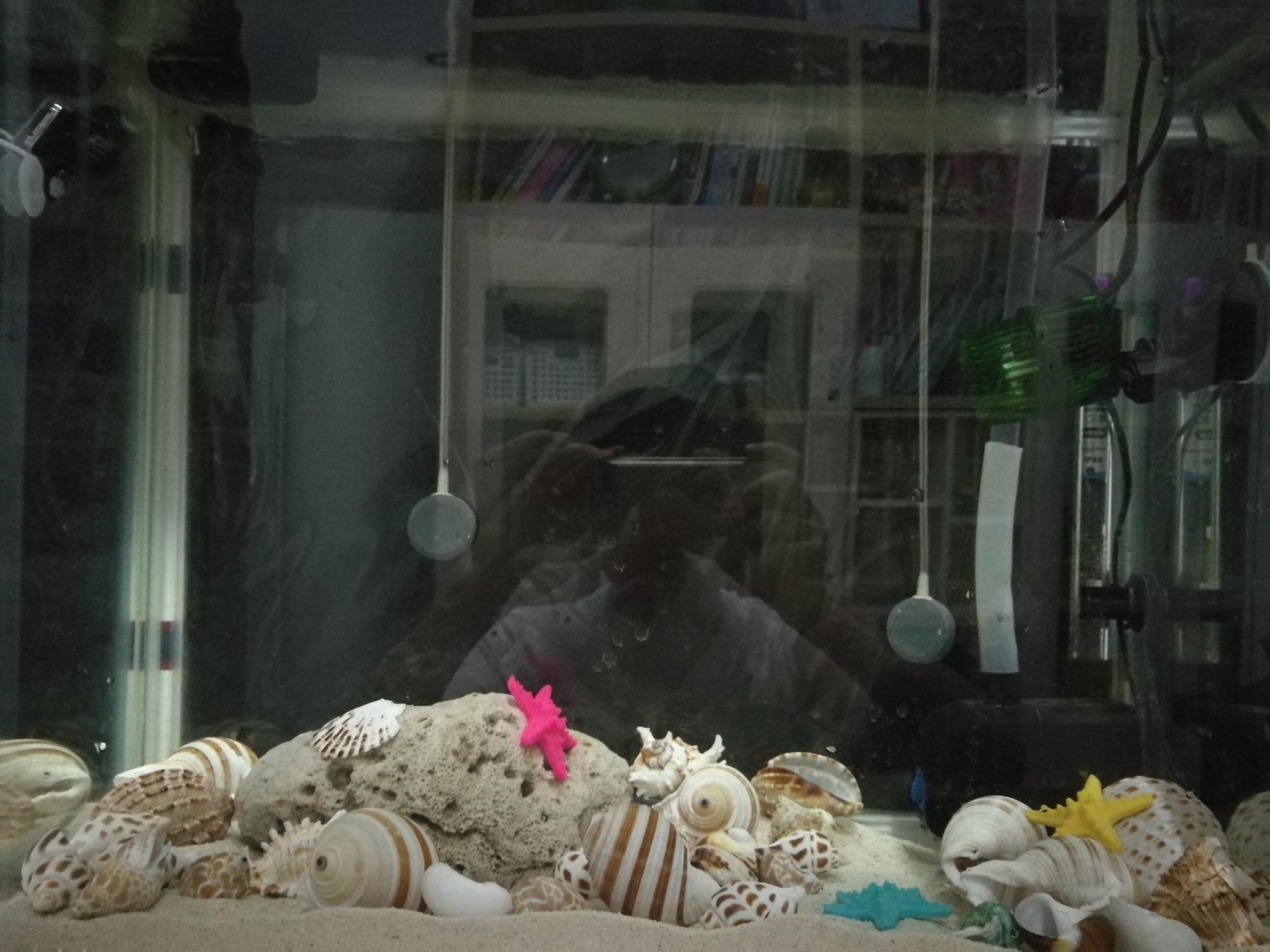 准备开一缸卷贝类等鱼中 北京观赏鱼 北京龙鱼第5张