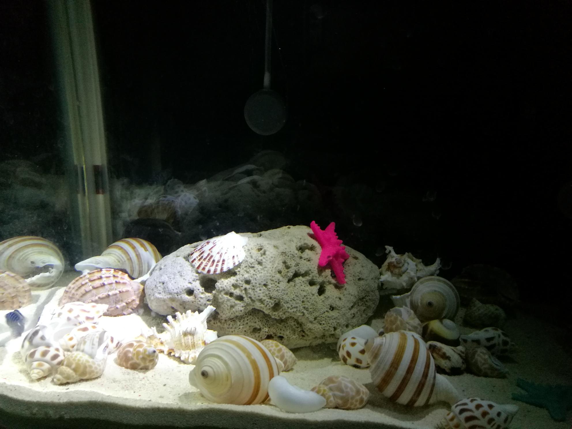 准备开一缸卷贝类等鱼中 北京观赏鱼 北京龙鱼第6张