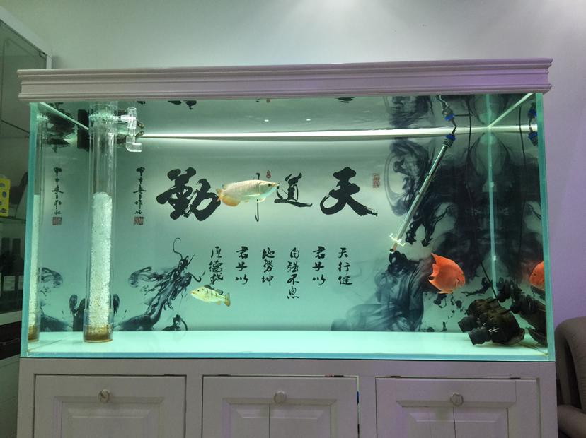换的果然不一样 北京龙鱼论坛 北京龙鱼第2张