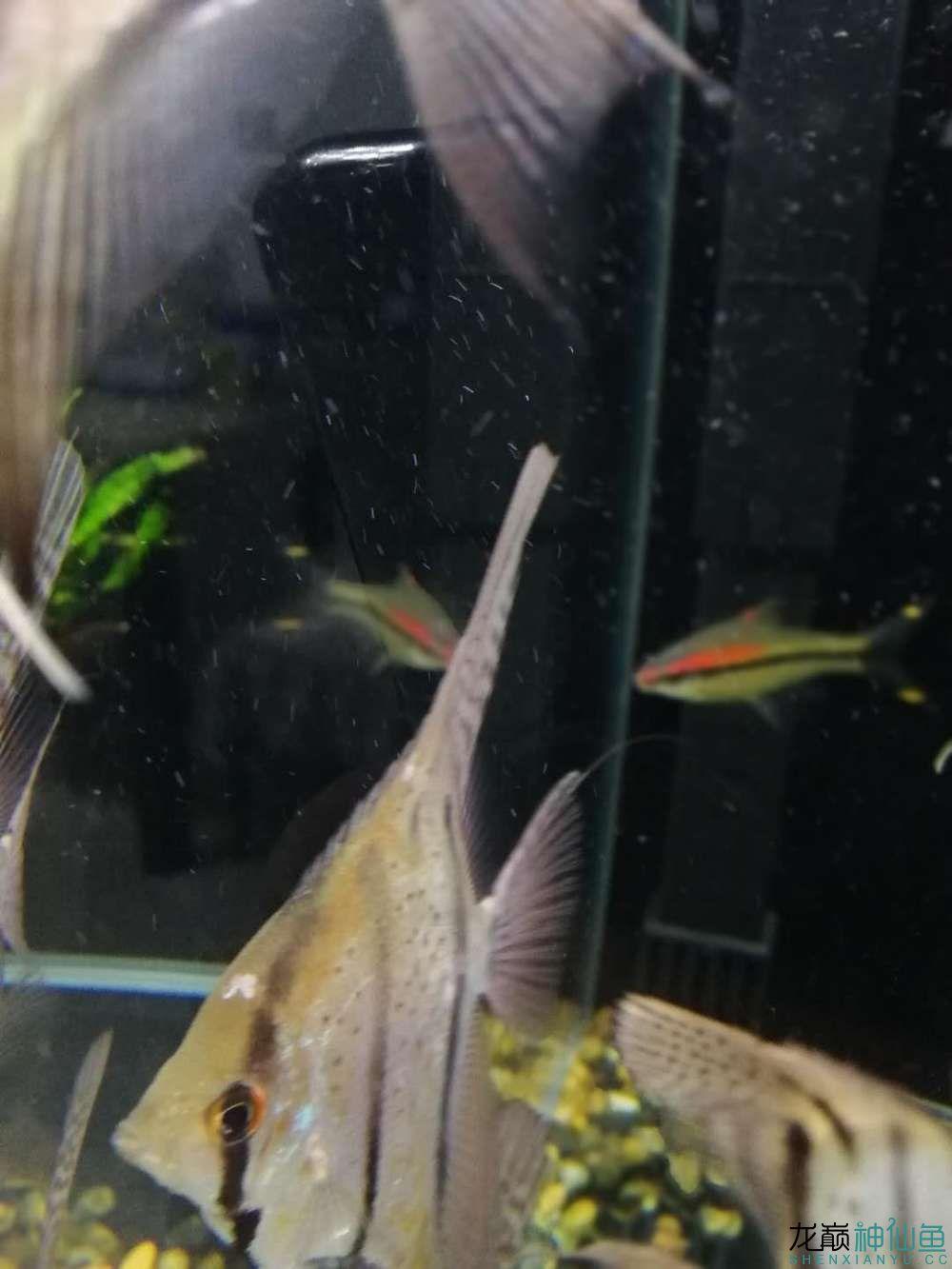 请各位大神帮我看看这是什么毛病 北京观赏鱼 北京龙鱼第3张