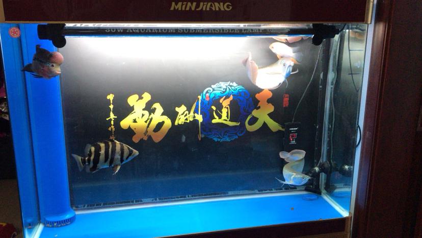 求大神帮我看看nec灯是不是正品 北京观赏鱼 北京龙鱼第2张