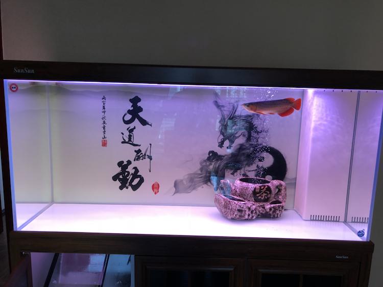 新缸请教 北京观赏鱼 北京龙鱼第1张