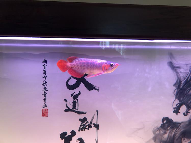 新缸请教 北京观赏鱼 北京龙鱼第5张