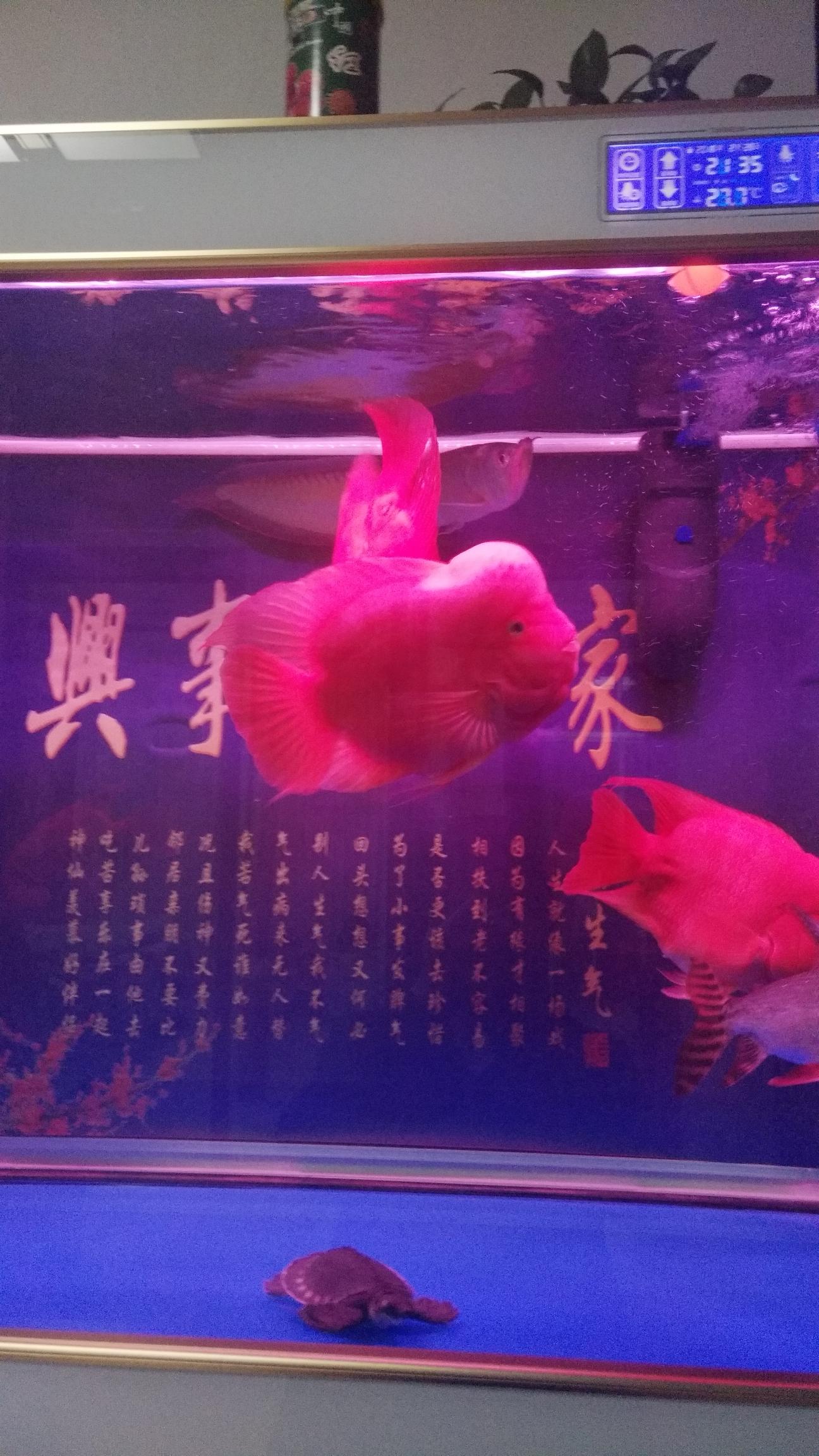 各位鱼友晚安 北京观赏鱼 北京龙鱼第4张
