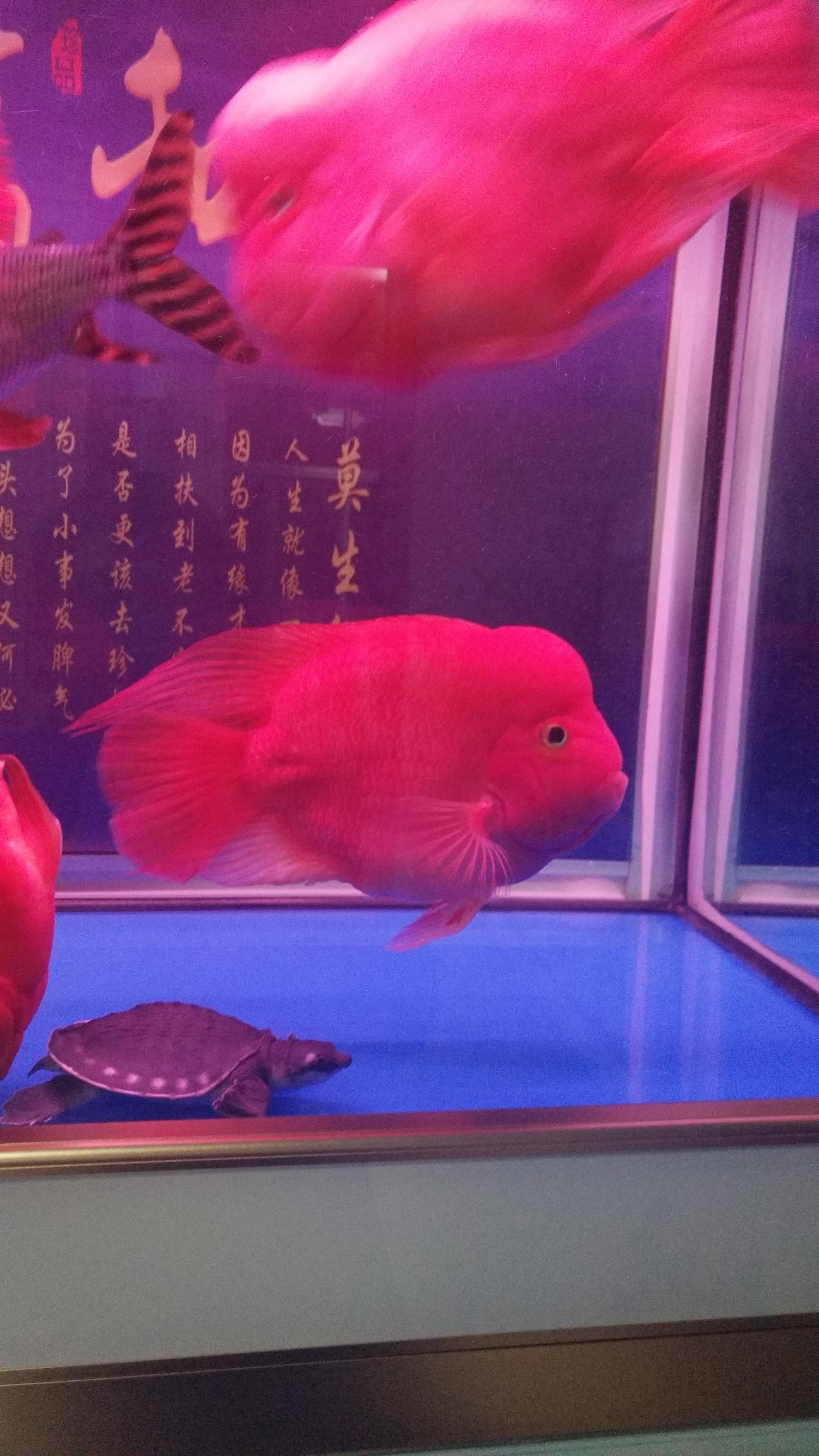 各位鱼友晚安 北京观赏鱼 北京龙鱼第5张