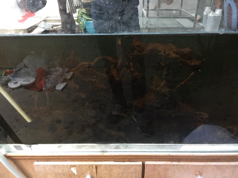 北京哪家有黑白皇冠魟鱼不折腾会死掉 北京龙鱼论坛 北京龙鱼第5张