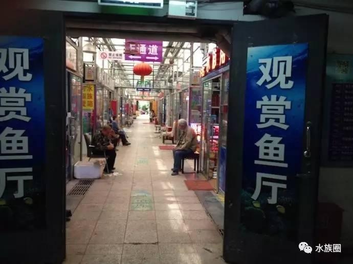 #龙巅商报315#4被曝光商户欠鱼友一个表态 北京龙鱼论坛 北京龙鱼第2张