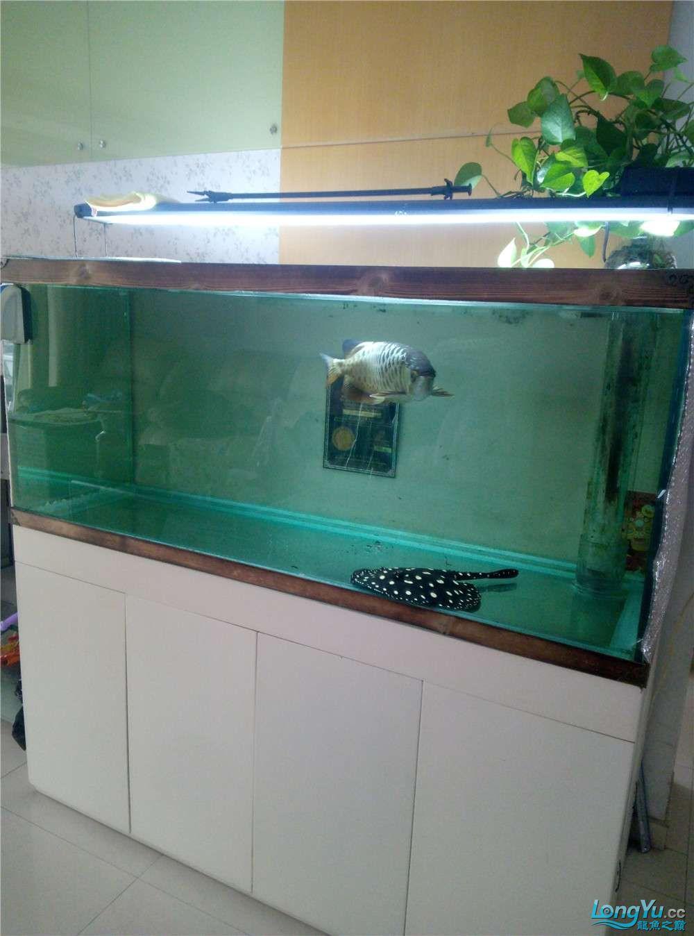 出售50公分左右金龙鱼 北京观赏鱼 北京龙鱼第1张