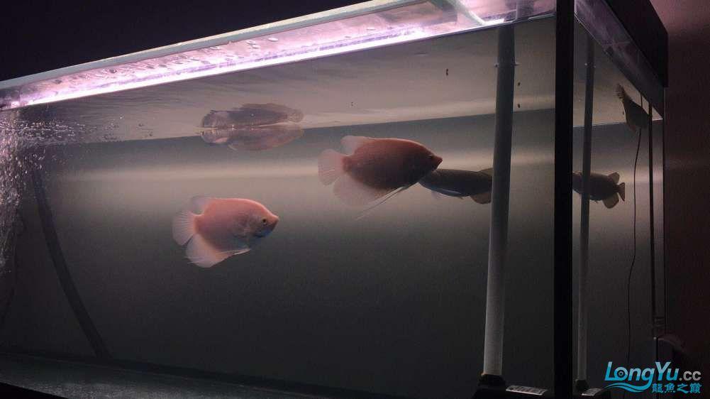 新人求助关于喂食和水质 北京观赏鱼 北京龙鱼第3张