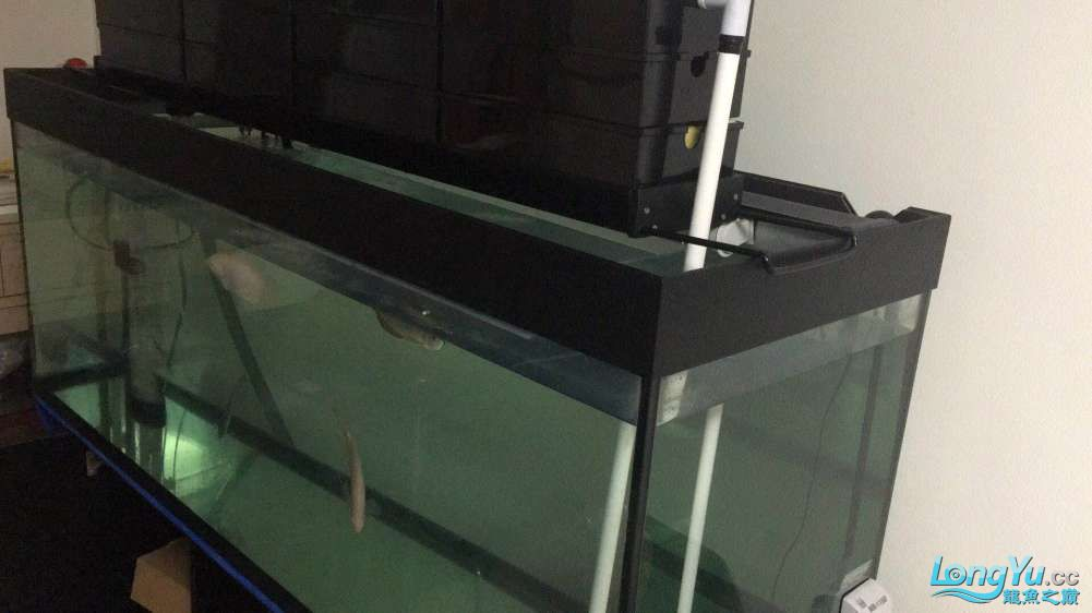 新人求助关于喂食和水质 北京观赏鱼 北京龙鱼第4张