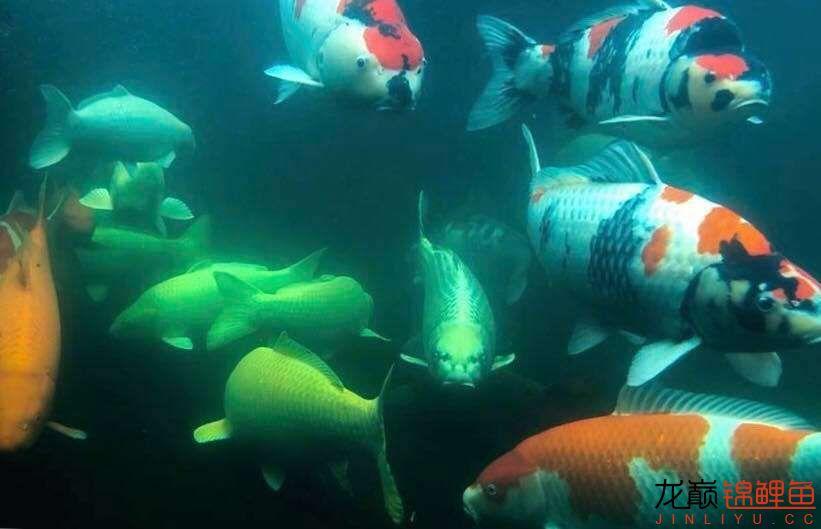 再说硝化细菌 北京观赏鱼 北京龙鱼第2张